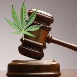 Medical Marijuana Caregiver Protection
