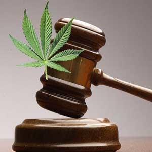 Medical Marijuana Caregiver Protection