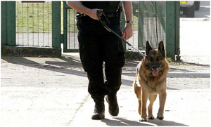 police dogs and 4th amendment